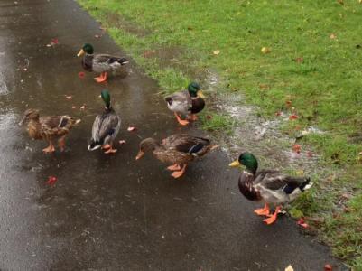 Photo courtesy of Washington Department of Ecology