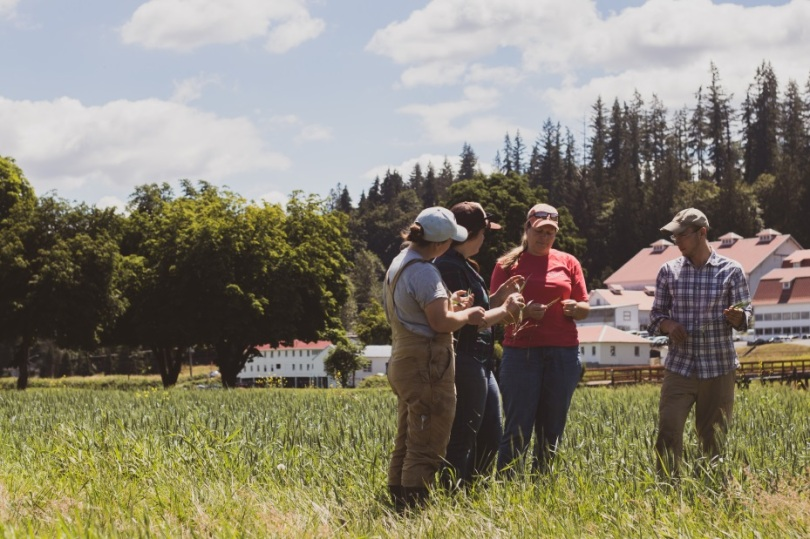 carnation farmers