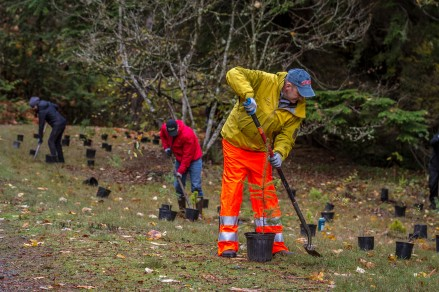 King County employees held volunteer events throughout planting season.