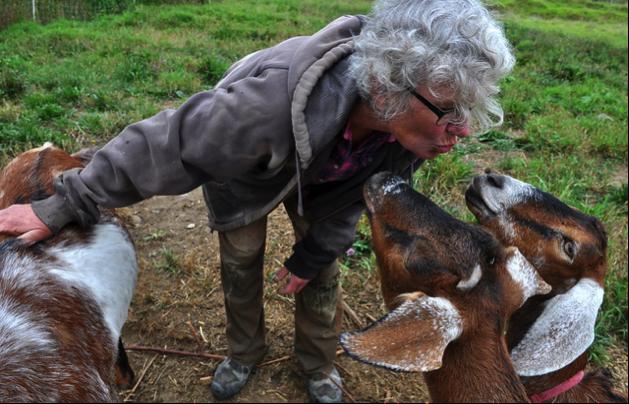 LFI goat farm.png
